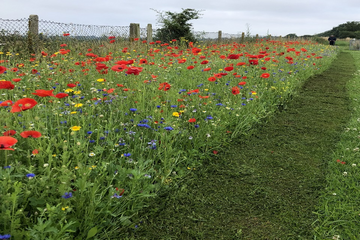 A stretch of wildflowers in Bedford